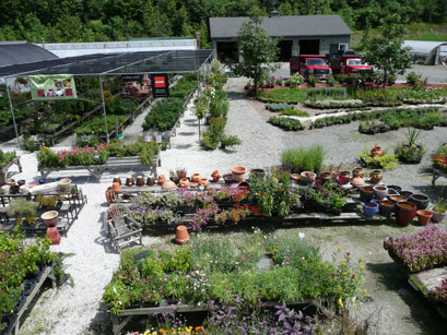 We specialize in the new, the different and plants that grandma grew. We offer a wide variety of unusual and heirloom plants, including many hardy older roses, over 20 varieties of heirloom tomatoes, 15 colors of nicotiana, over 2000 perennials, and a vast array of geraniums. Click on the links above for lists of many of our plants. We also offer top soil, decorative gravel and services for the professional landscaper.